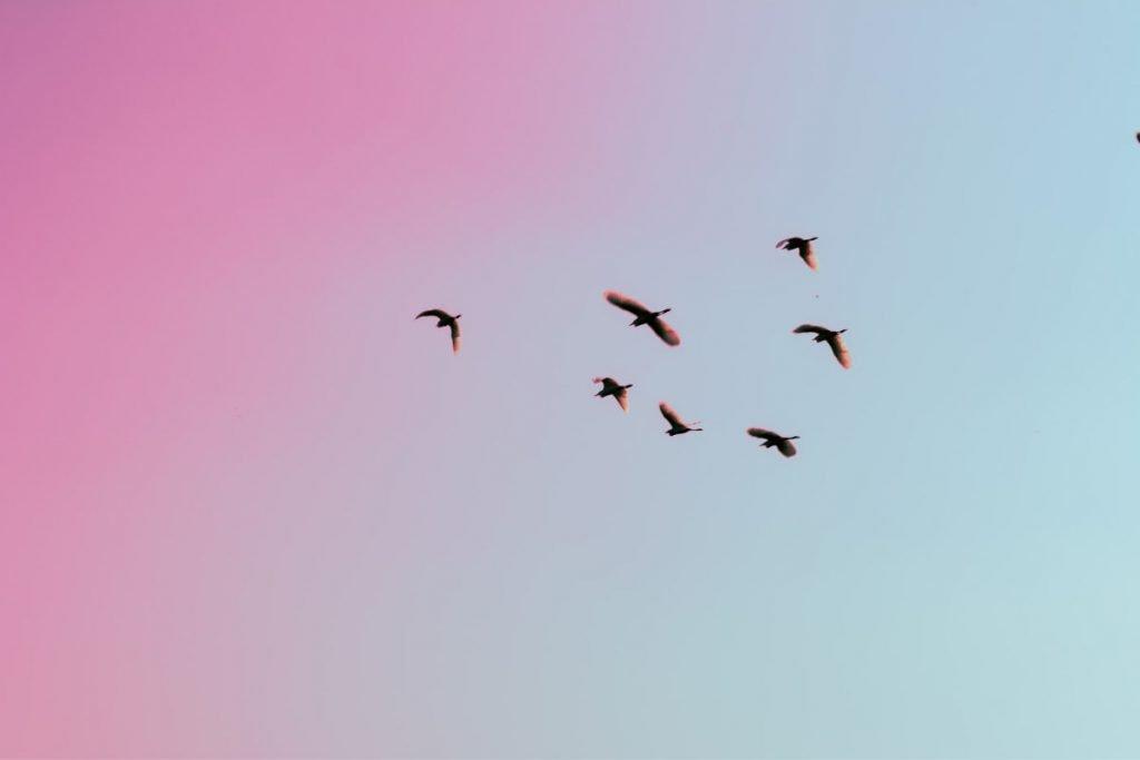 birds in pink sky