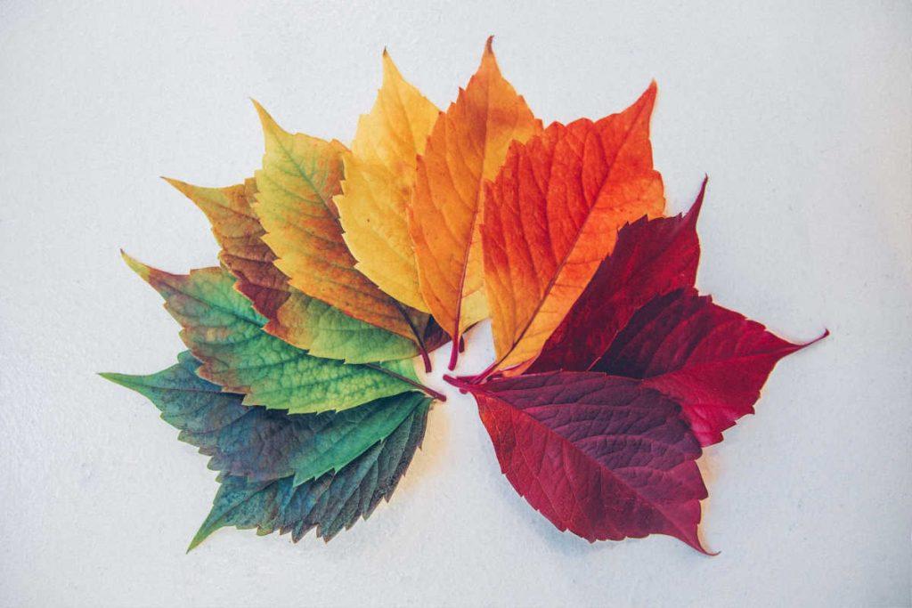 color change leaves